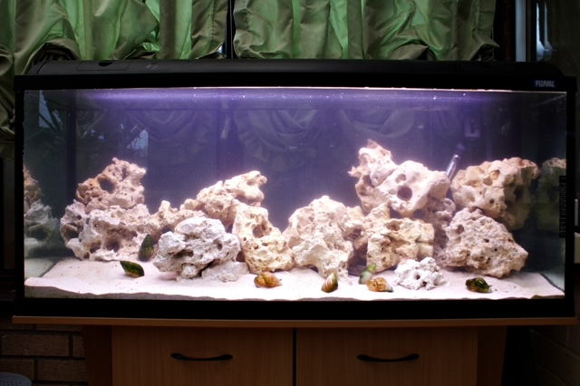 how to clear up a cloudy fish tank