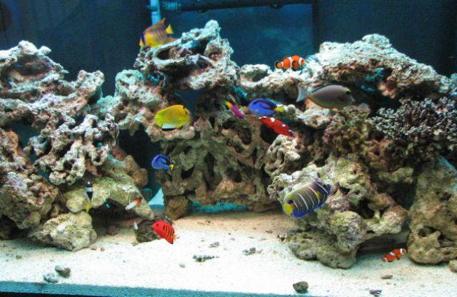 Reef Aquarium Choices Chris Reef